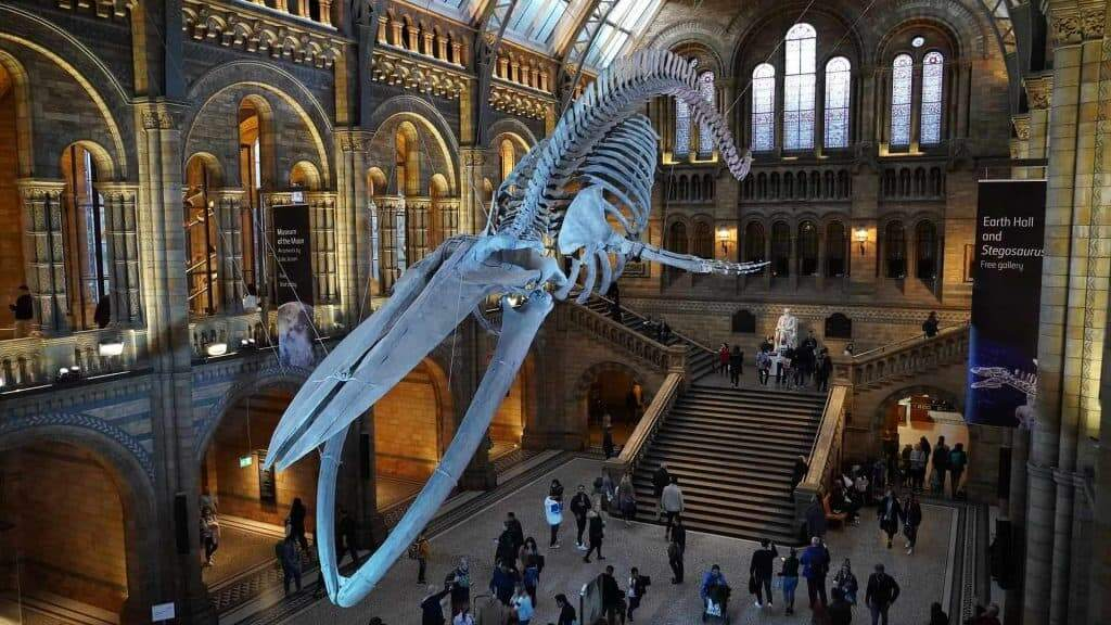 natural history museum tourist attractions in London_1